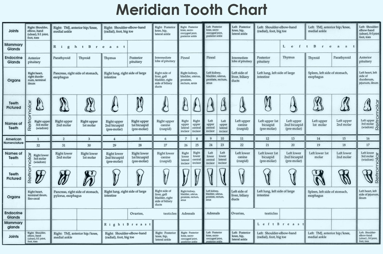 Where The Meridian Tooth Chart Comes From